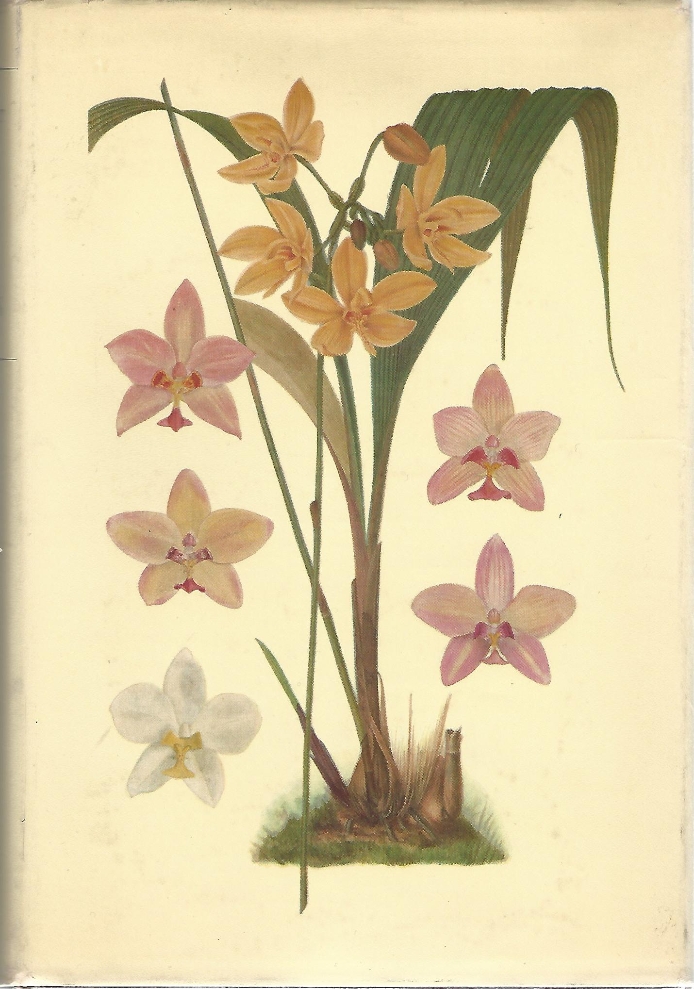 Image for A Revised Flora of Malaya: An Illustrated Systematic Account of the Malayan Flora, Including Commonly Cultivated Plants, Volume 1: Orchids of Malaya.