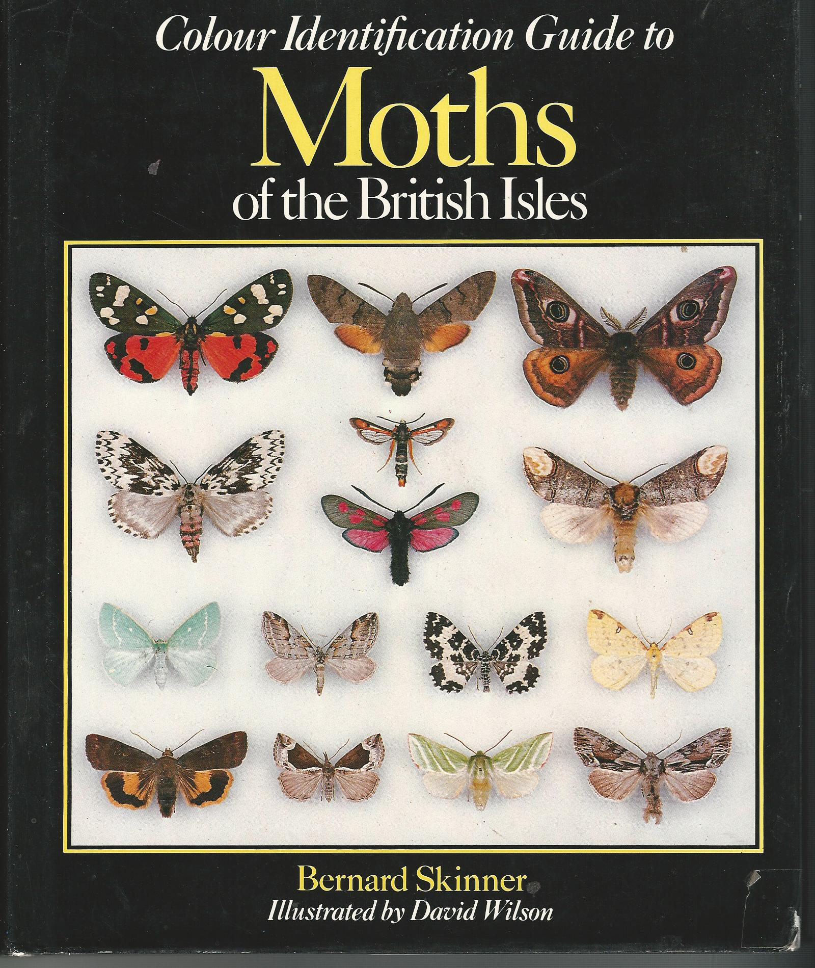 Image for Colour Identification Guide Moths British Isles.