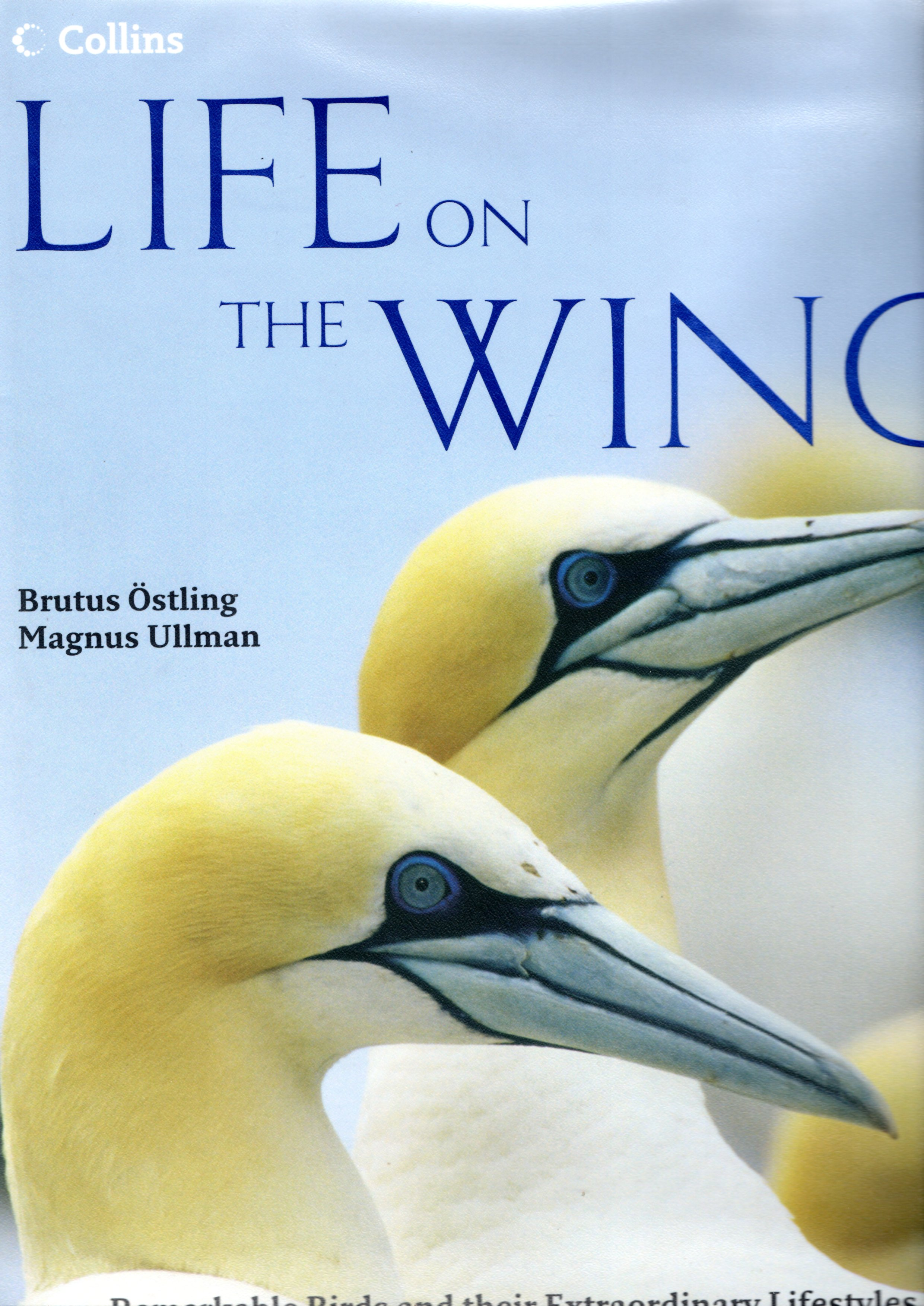 Image for Life on the Wing: Remarkable Birds and their Extraordinary Lives
